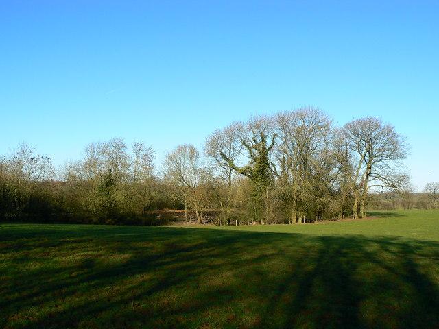 Trees adjacent to old railway trackbed, Savernake