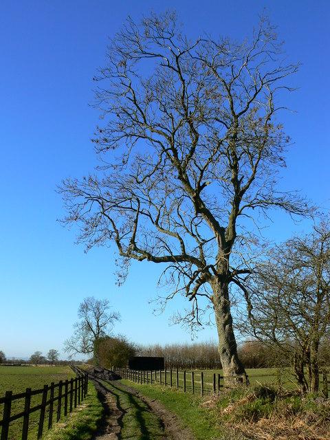 Farm track near Marr Green, Wiltshire