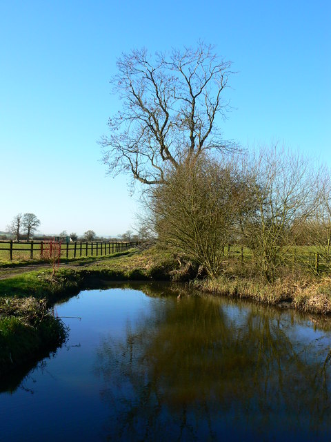 Tree and pond on farm track near Marr Green, Wiltshire