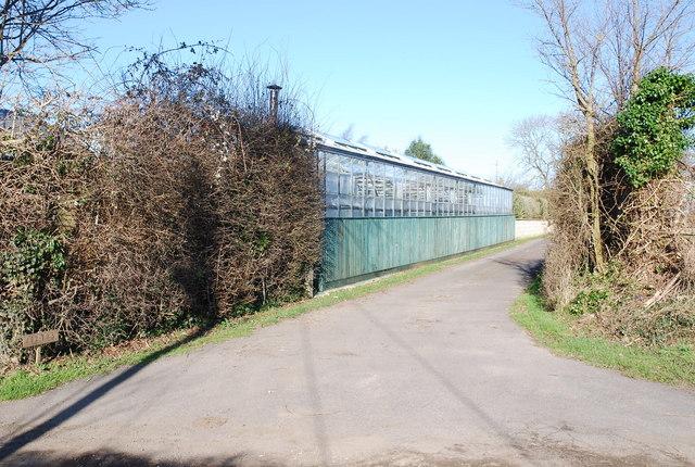 Nurseries opposite Priory Farm