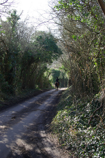 Horse Rider in Dean Lane