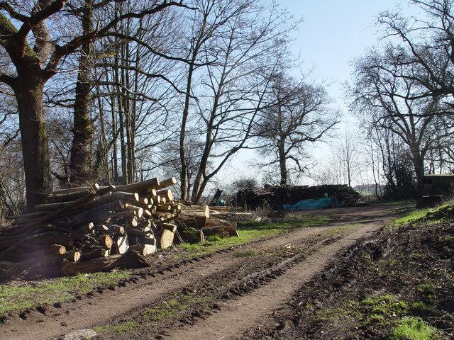 Lumberyard, nr Manswood