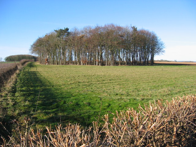 Wood, Elmswell Wold