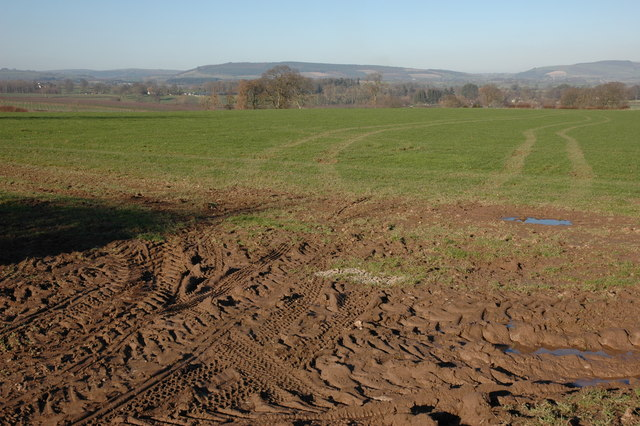Field  near Sourbrook Farm