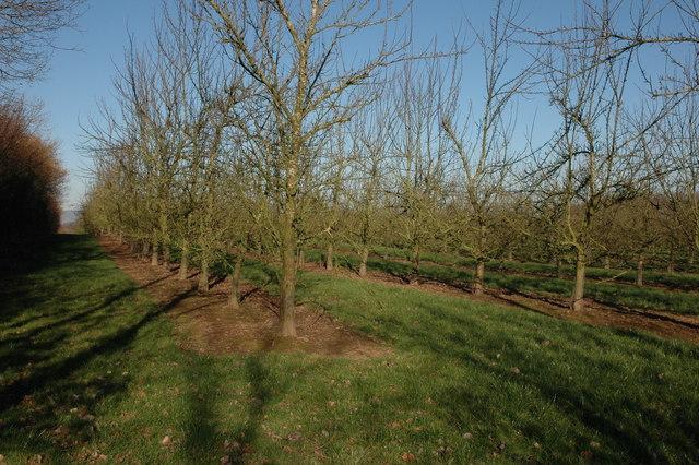 Orchard at Broxwood