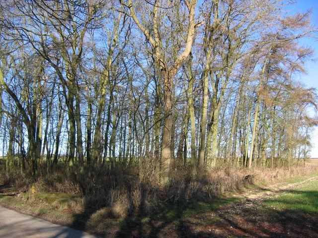 Wood, Westfield Farm