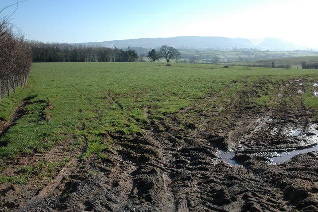 Field near Newton Court
