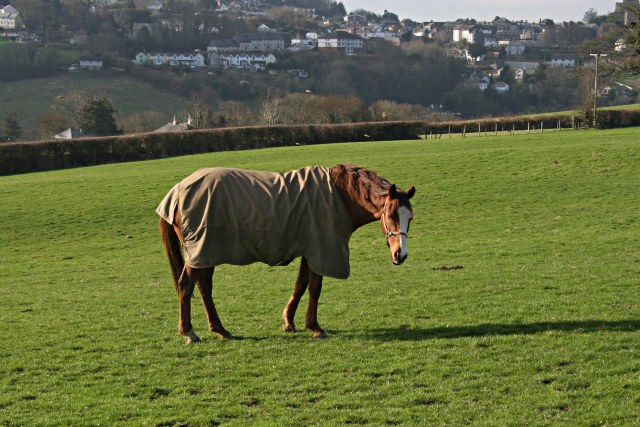 Horse near Goodmansleigh
