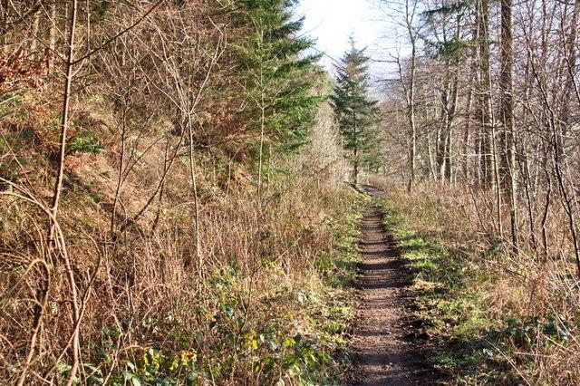 Footpath in Dodd Wood