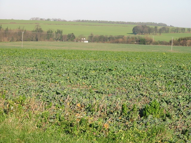 Open farmland near East Studdal