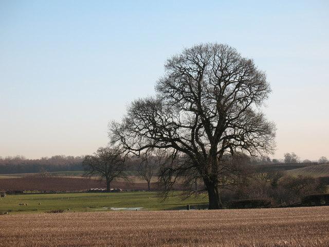 Farmland with mature trees at Feedale Farm