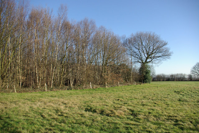 A Southern Corner of Mereworth Woods