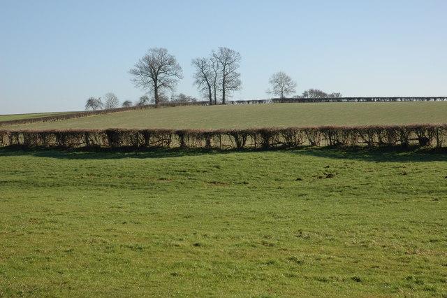 Farmland near Dilwyn
