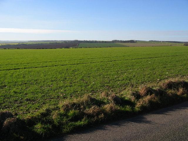 Cottam Grange Farmland