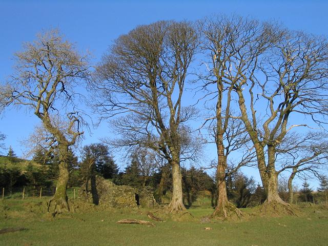 Trees and ruin near Pant-y-fotty