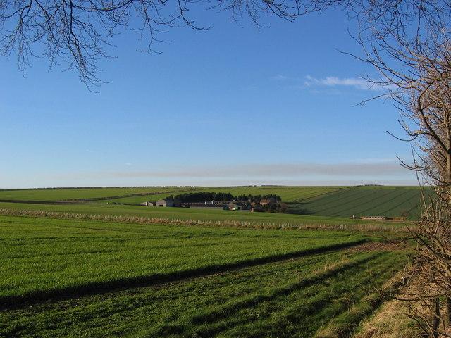 Helperthorpe Pasture