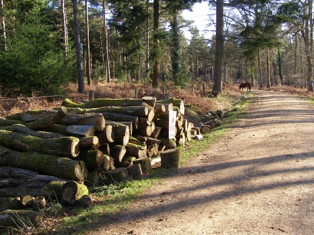 Timber stack in Milkham Inclosure, New Forest