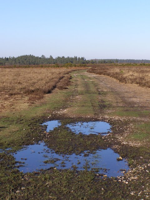 Track on Bratley Plain, New Forest