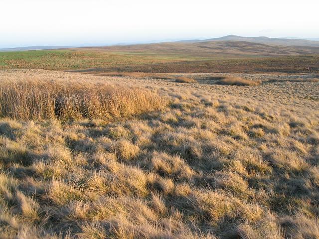 Moorland near Creigiau Llwydion