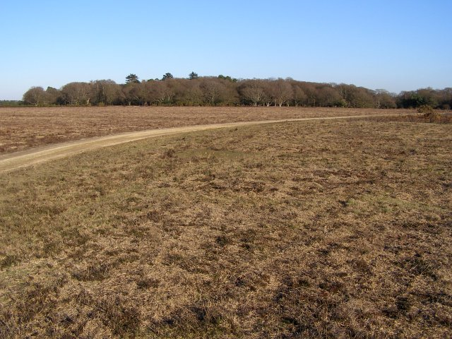Bratley Plain and Slufters Inclosure, New Forest