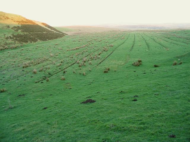 Gullies near Llys Dymper