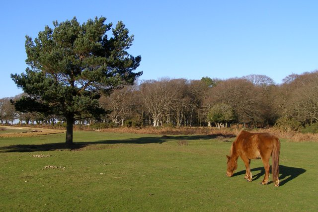 Lawn alongside the A31, Bratley Plain, New Forest