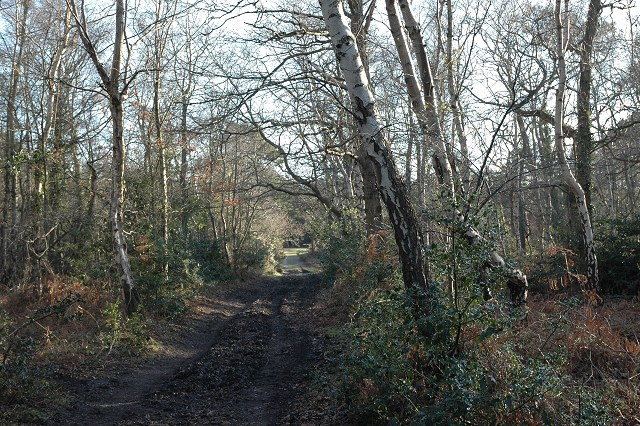 Footpath through woodland, Badminston