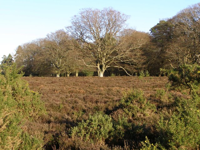 Heathland on the southwestern edge of Slufters Inclosure, New Forest