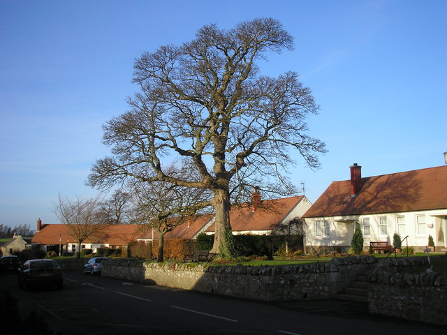 New Houses in Temple around a Mature Oak Tree