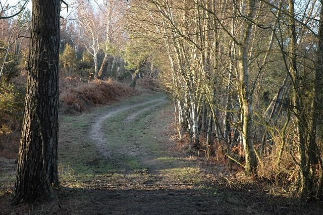 Footpath, Spratsdown Plantation