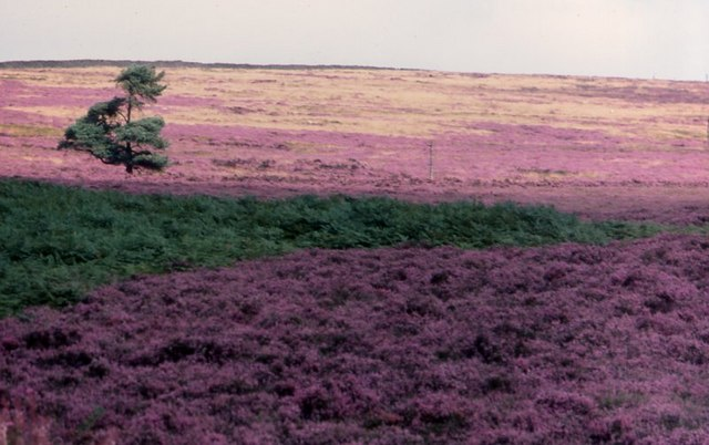 Longridge Fell
