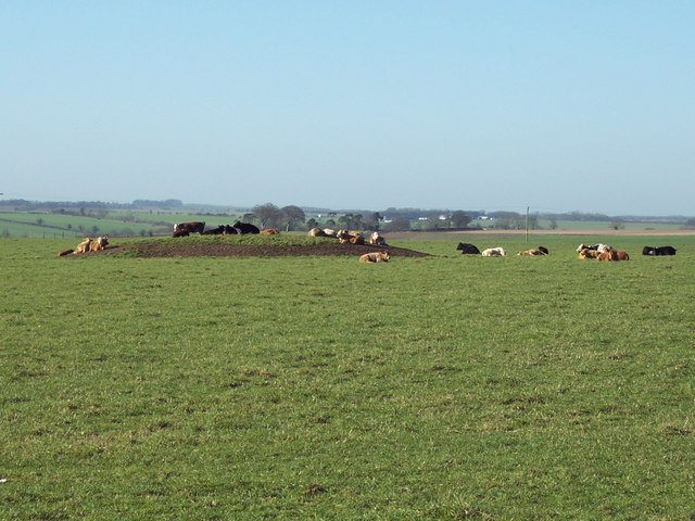 Cattle resting on a Tumulus