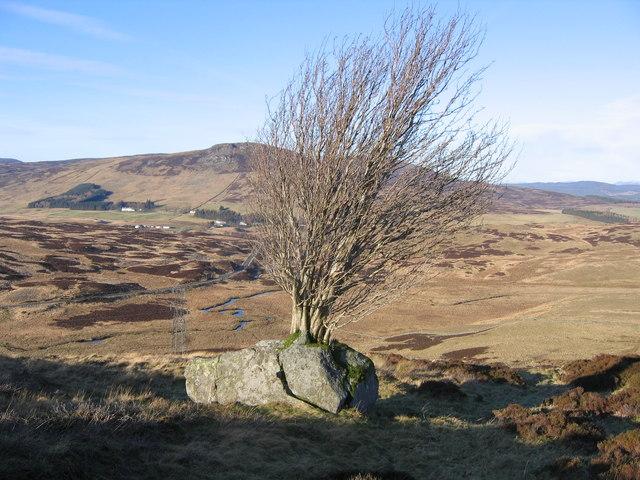 Tree growing on boulder