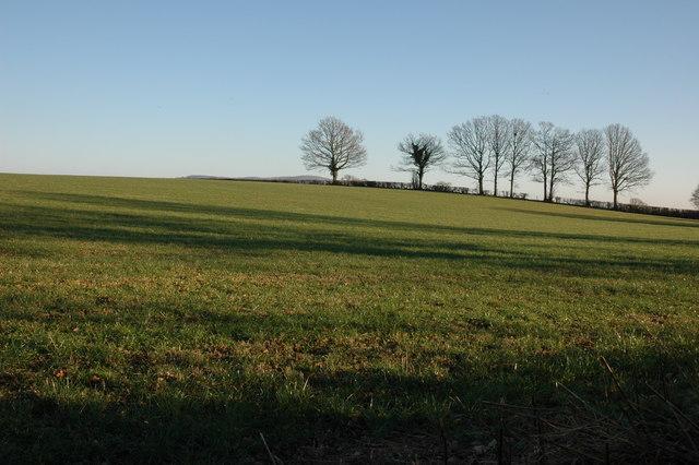 Field near Woonton