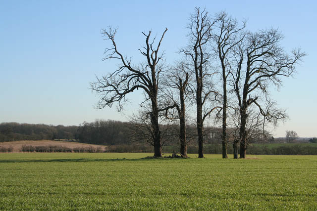 Trees near Coby Pasture Farm
