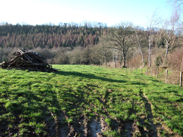 Towards Homing Down Plantation