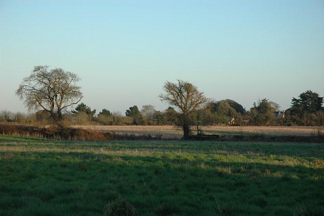 Field & hedgerow, Badminston.