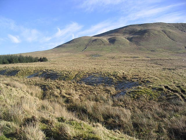 Rough grazing at Birren Sike