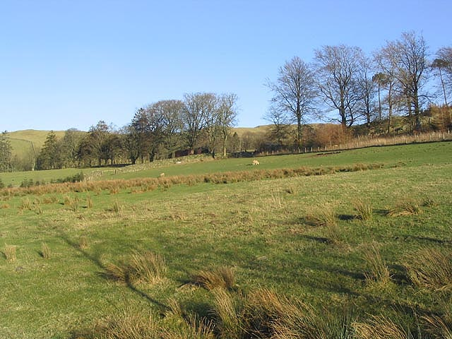 Grazing field near Binks