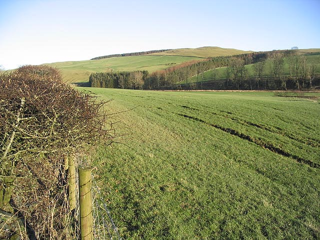 Pasture near Teindside Cottage