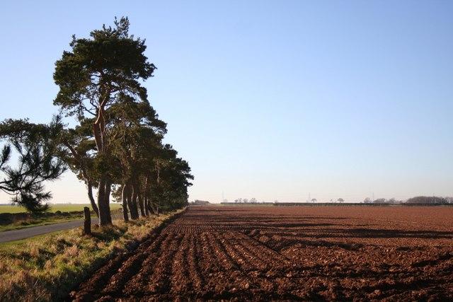 Blankney Heath