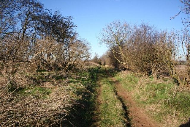 Gorse Lane