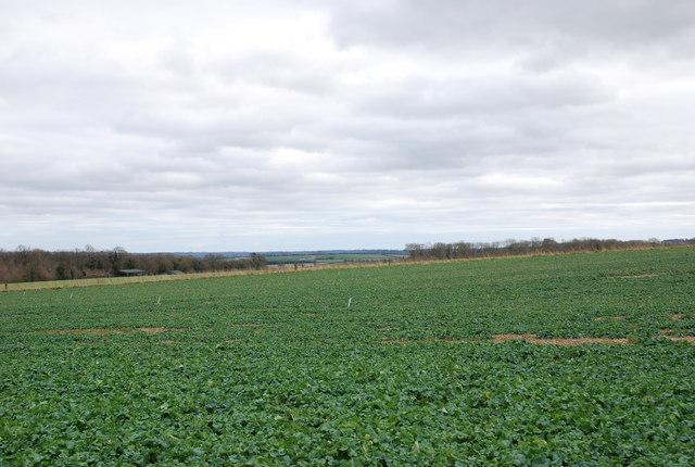 Pheasant Shooting Range among coppices