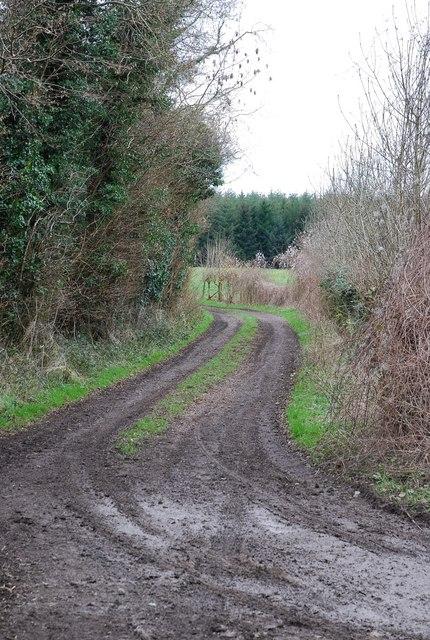 Track along Leg Row