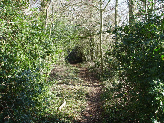 Bratch Lane through Harry's Coppice