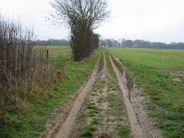 Byway to Pitt Wood