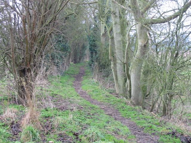 Looking SW along bridleway to Ilenden Farm