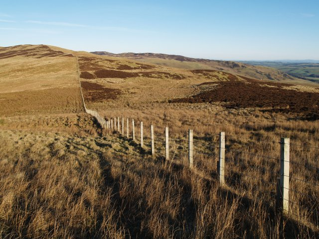 Fence, Sandbed Moss.