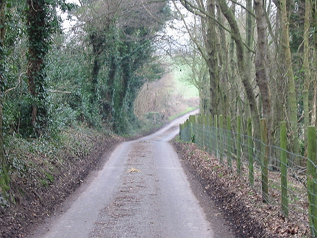 Wooded country lane