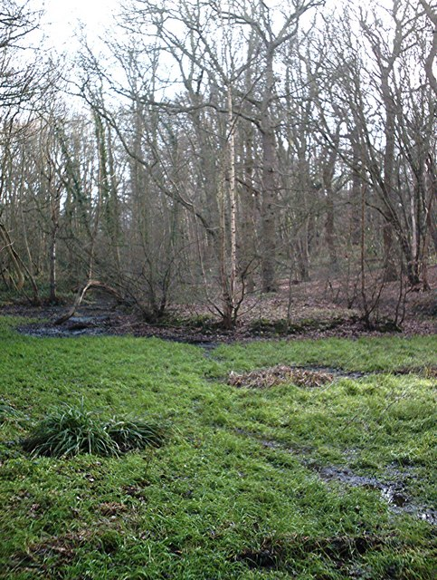 The pond - Coombe Wood, Thundersley